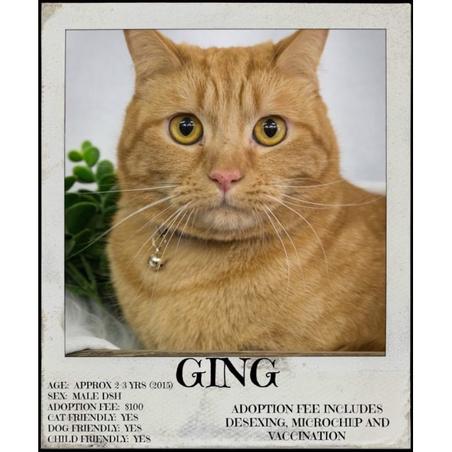 Photo of Ging