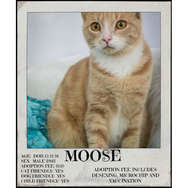 Photo of Moose