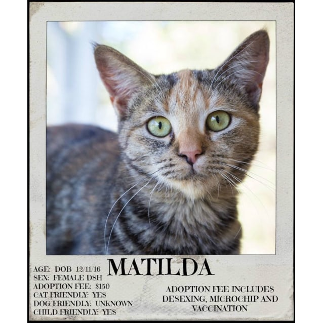 Photo of Matilda