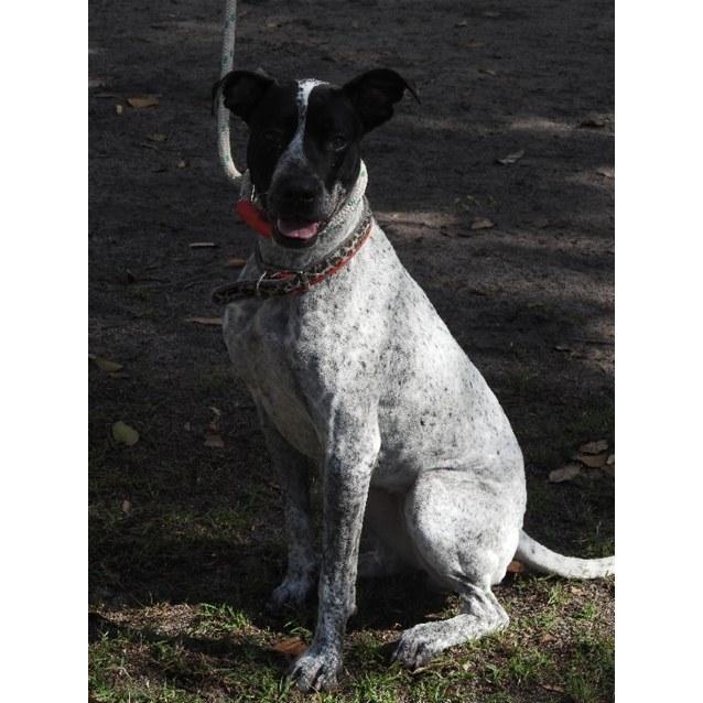 Photo of Zoie