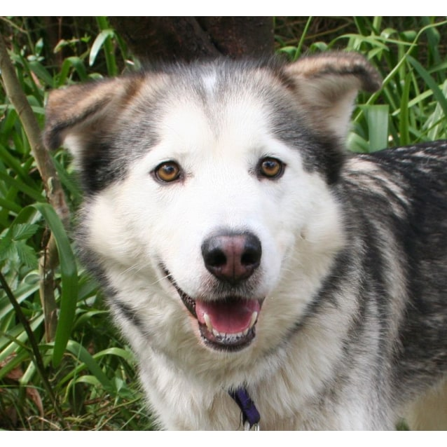 Photo of Juno ~ Special Needs