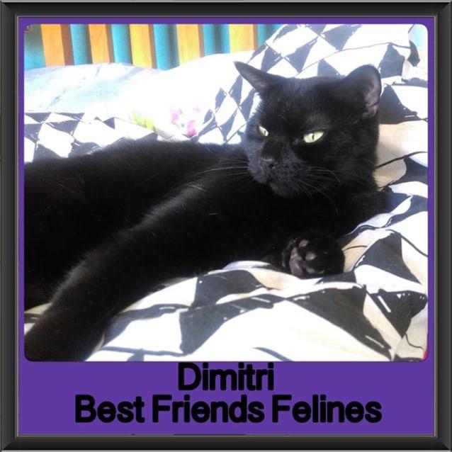 Photo of Dimitri