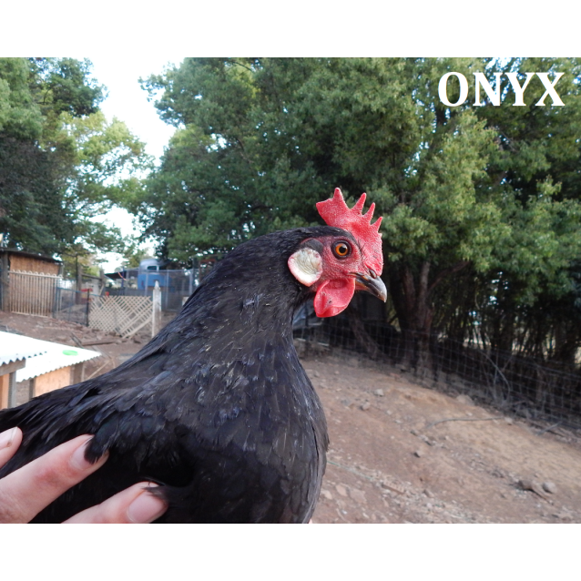 Photo of Onyx & Cider