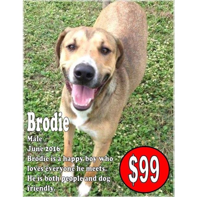 Photo of Brodie