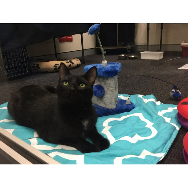Photo of Panther (Formerly Cosmos)