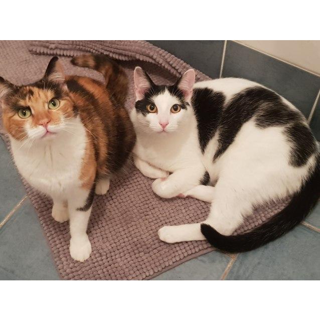 Photo of Cash *Sydney Animal Rescue Inc.*