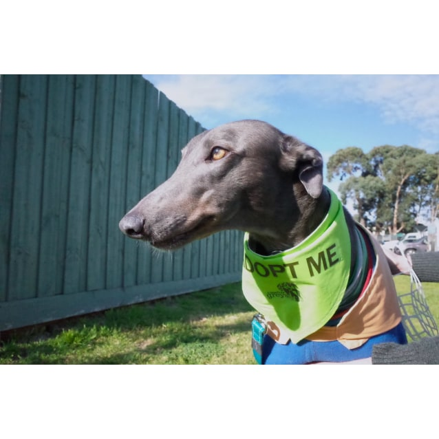"""Photo of """"Frankie"""", The Rock Star. Melbourne"""