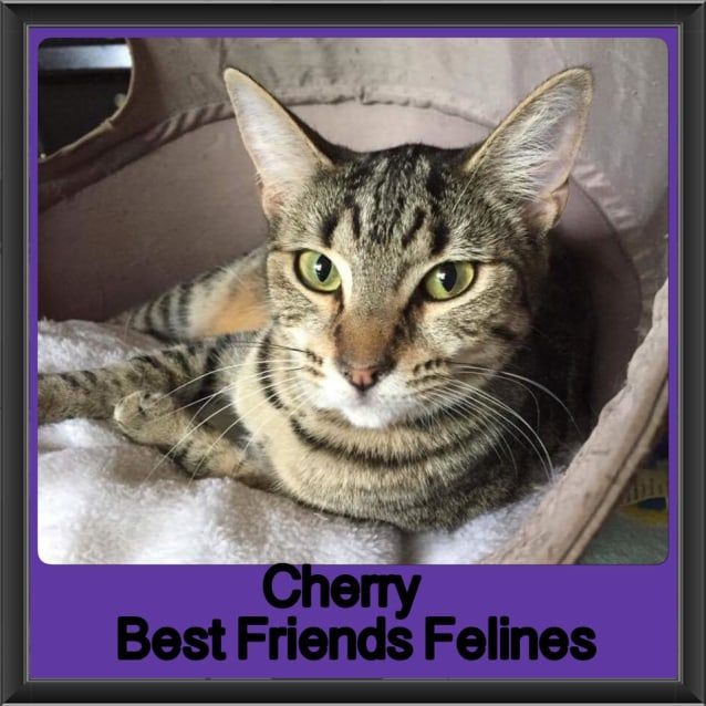 Photo of Cherry