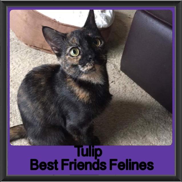 Photo of Tulip