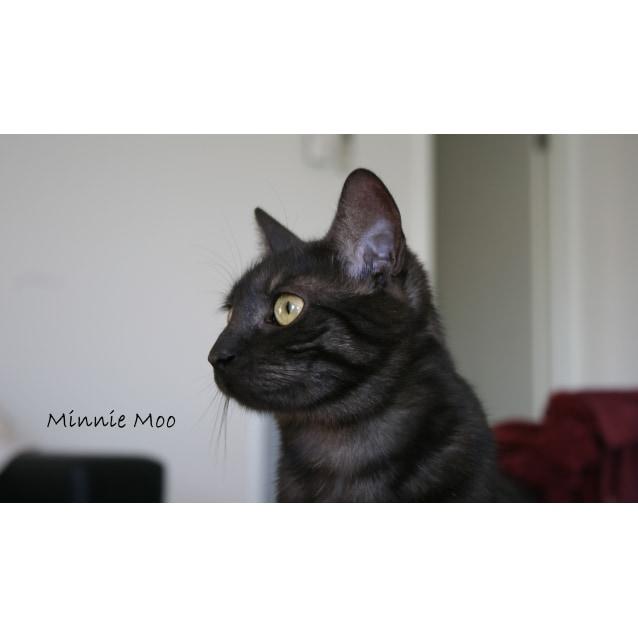 Photo of Minnie Moo