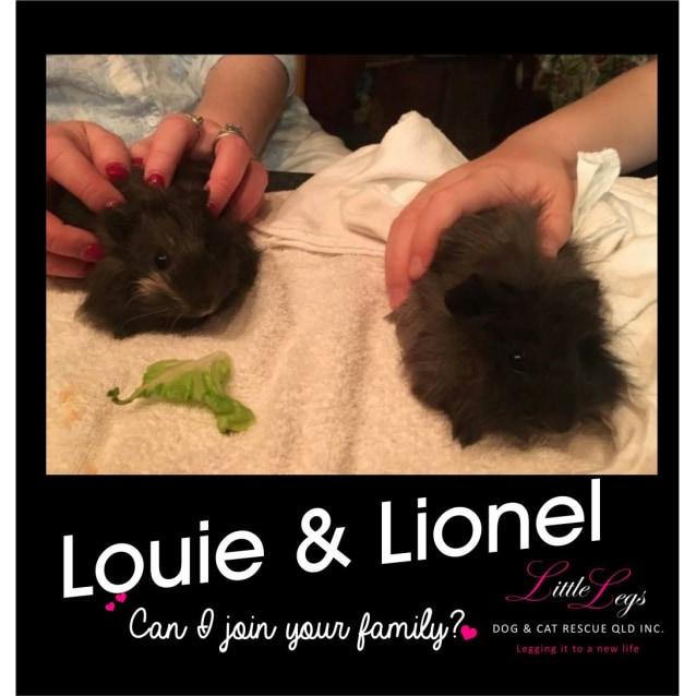 Photo of Louie & Lionel