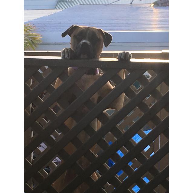 Photo of Special Needs Heart Dog Pablo Bear