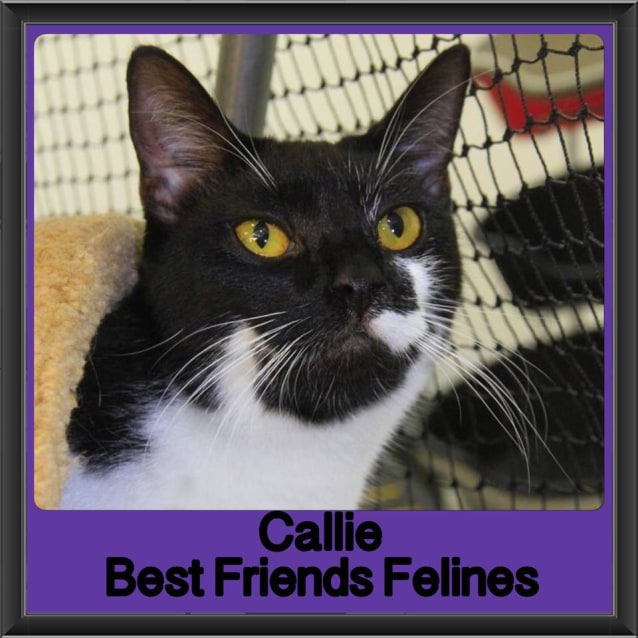 Photo of Callie