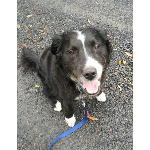 Photo of Jasper   Fantastic Companion Or Family Friend
