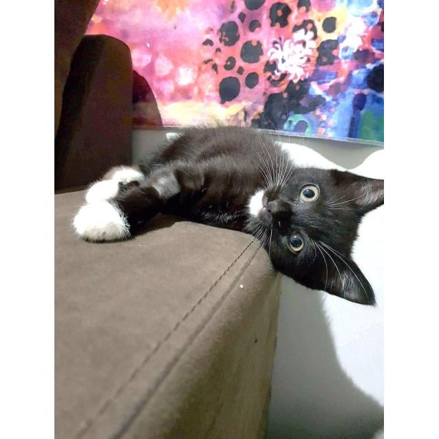Photo of Ombra