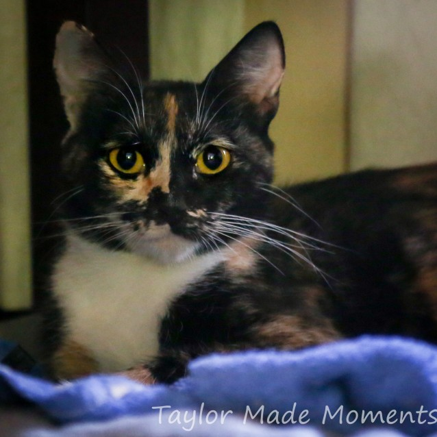 Photo of Sparkles * On Trial With My New Family *