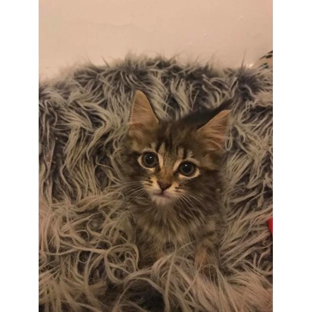 Photo of Little Lottie