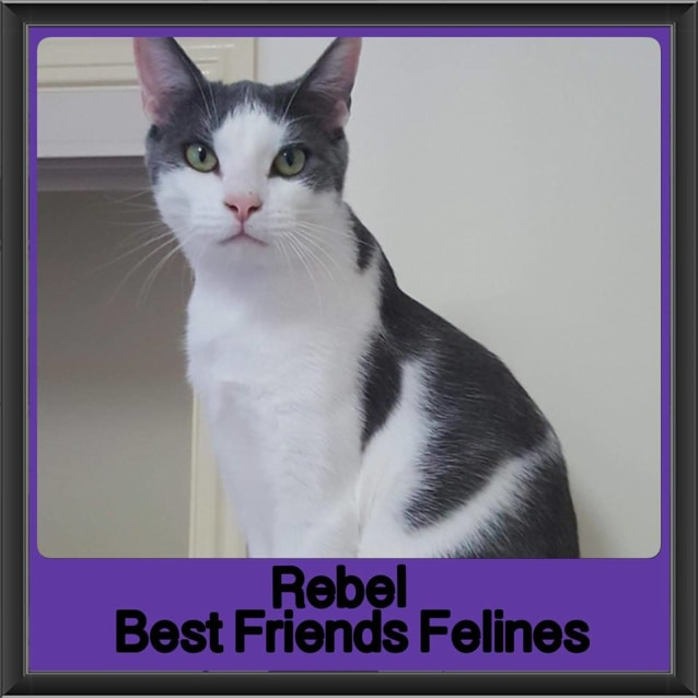 Photo of Rebel