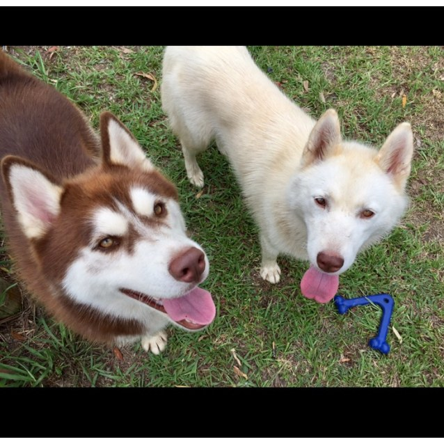 Photo of ❤🐾Dallas And Holly ~ Bonded Pair🐾❤