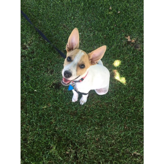 Photo of Peach **On Trial With My New Family **