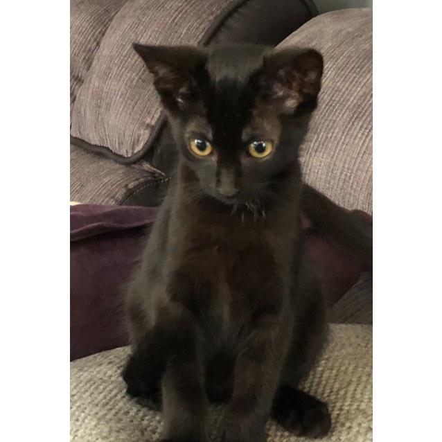 Photo of Rescue A Cat Inc. Coffee & Cocoa