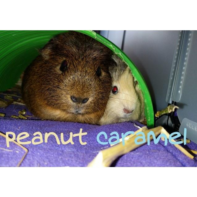 Photo of Peanut And Caramel