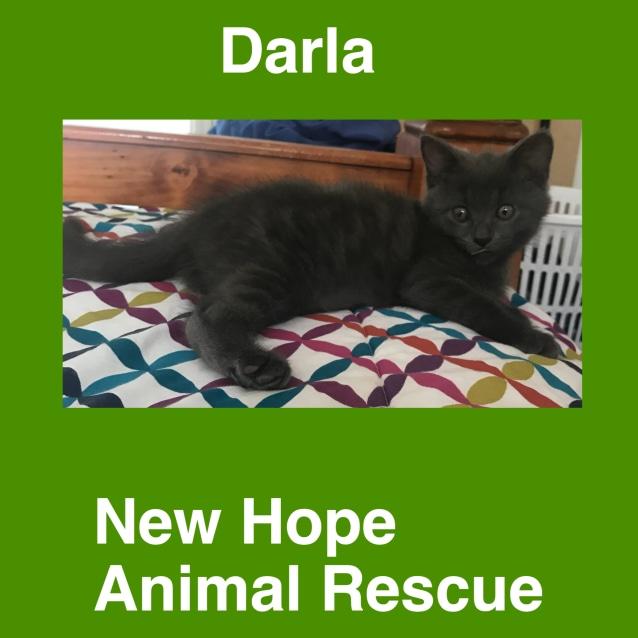 Photo of Darla