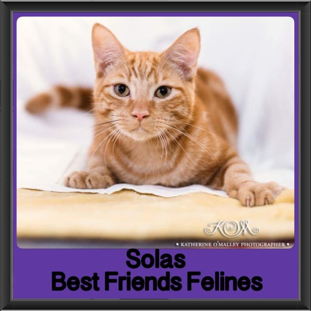 Photo of Solas