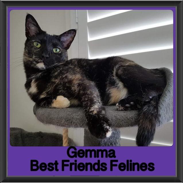 Photo of Gemma