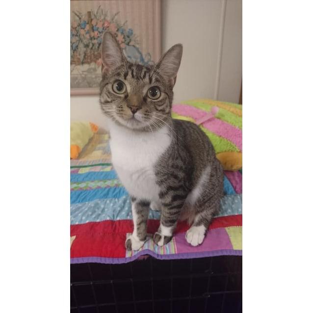 Photo of Bobsie
