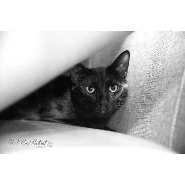 Photo of Smudge (Located In Bayswater)