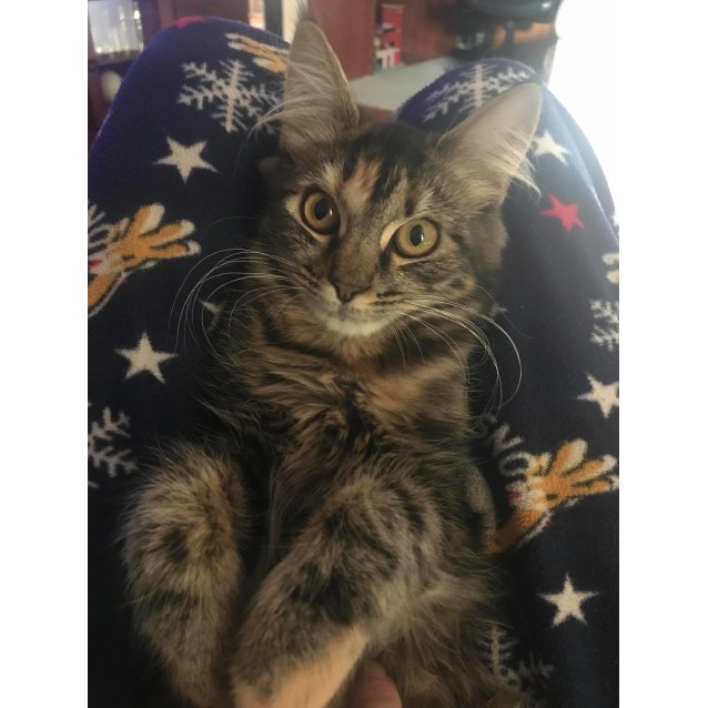 Photo of Toffee (Located In Boronia)