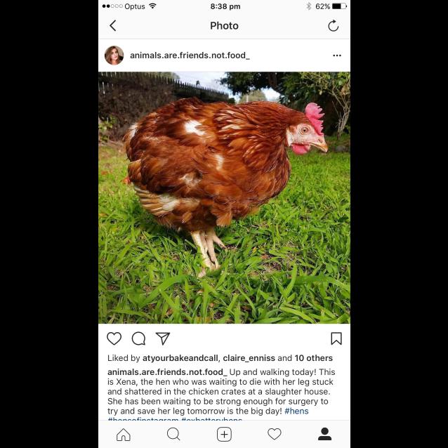 Photo of Hens