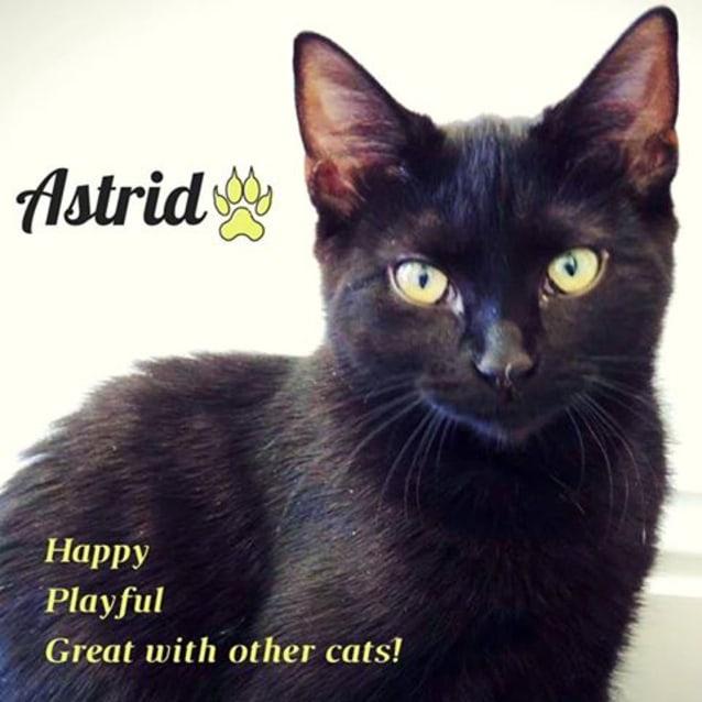 Photo of Astrid (Adoption Fee $120)