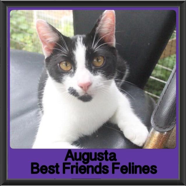 Photo of Augusta
