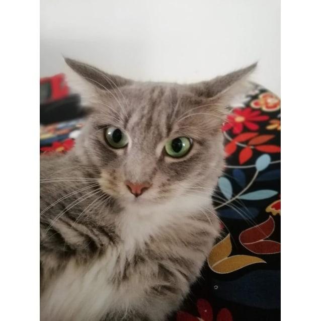 Photo of Buffy