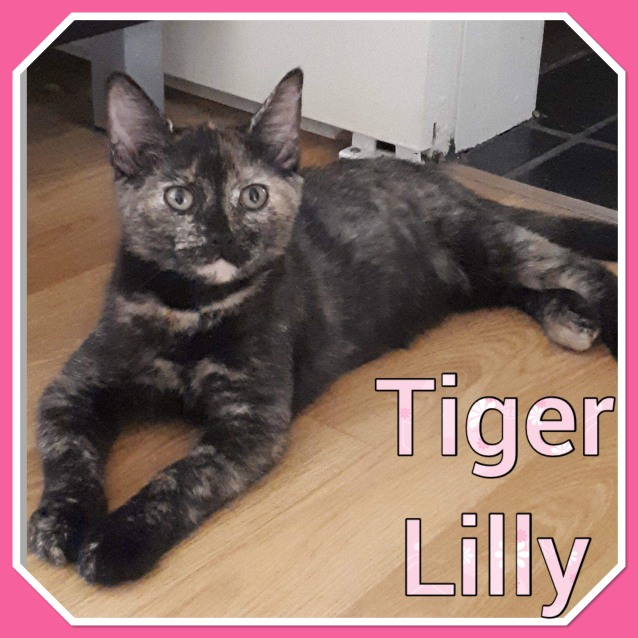 Photo of Tiger Lilly