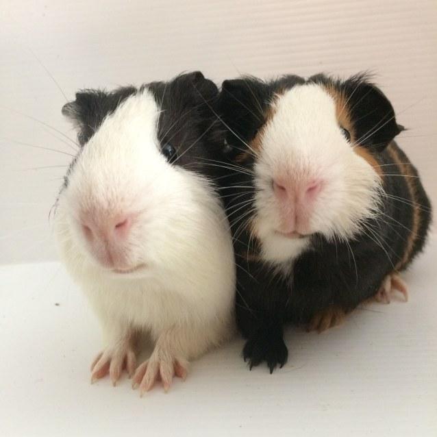Photo of Chomper & Zipper