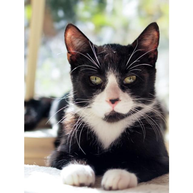 Photo of Dippa