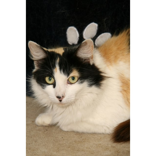 Photo of Patches