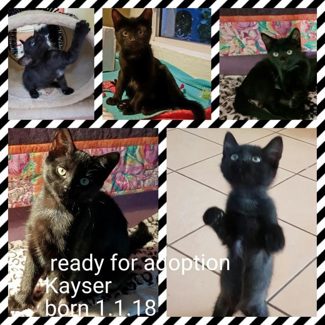 Photo of Kayser