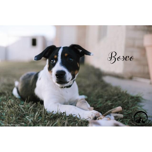 Photo of Bosco