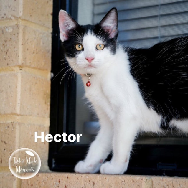 Photo of Hector * On Trial With My New Family *