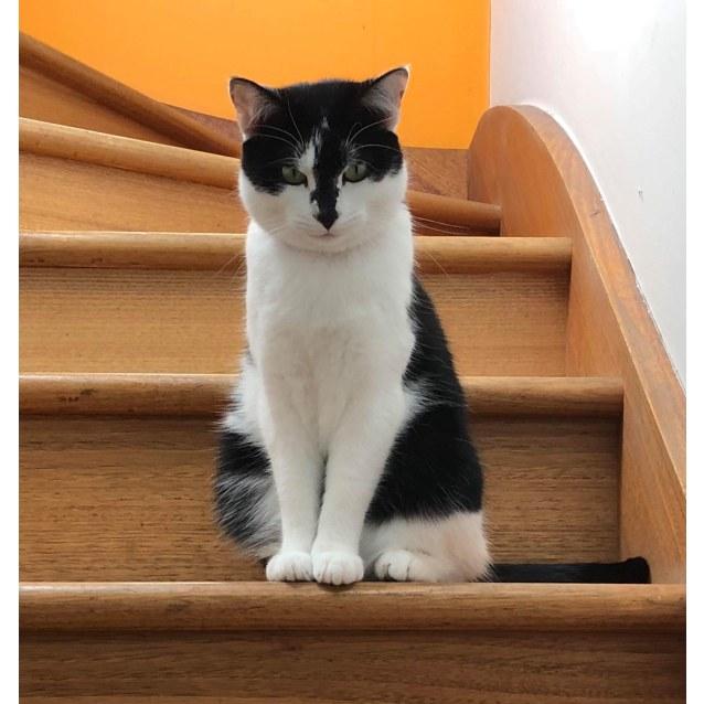 Photo of Sammy (Located In Brunswick)