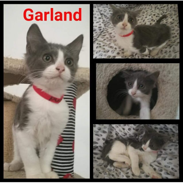 Photo of Garland