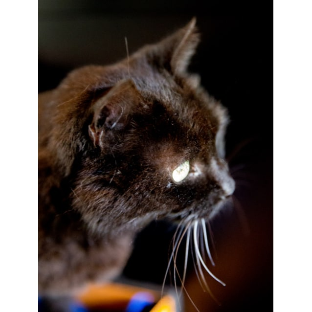 Photo of Puddy