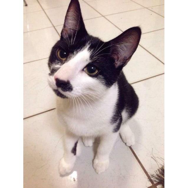 Photo of Oberyn