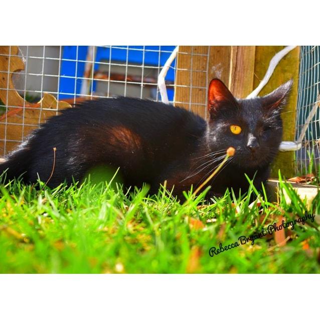 Photo of Elvira