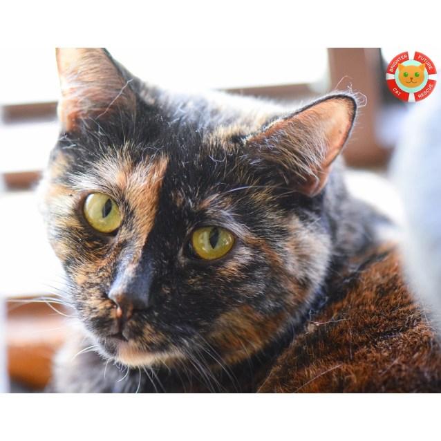 Photo of Jacinta   A Rare Jewel Of A Cat