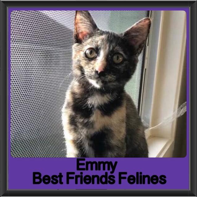 Photo of Emmy
